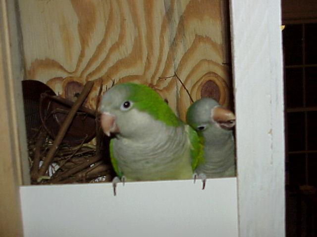 Kermitt and Gabby