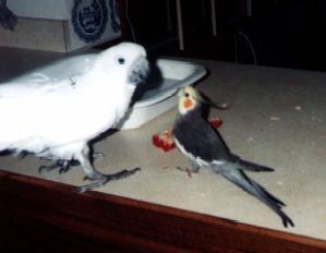 Tori & Bogie