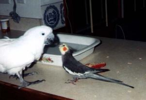 Tori giving  Bogie a Kiss